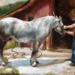 Carin Hebenstreit - Horse being Groomed at Echo Farm
