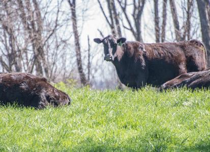 Cattle_1920x650