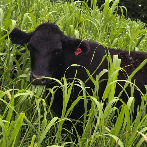 beef-responsible-protein